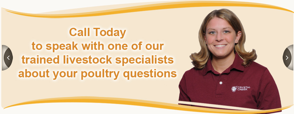 SpeciesBannerPOULTRY_CallToday