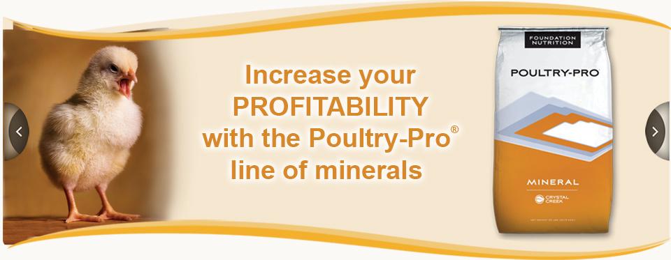 SpeciesBannerPOULTRY_PoultryProMineral