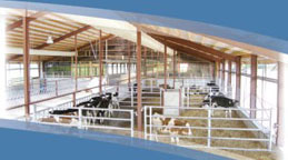 Calf barn with ventilation