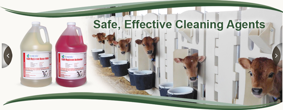 Calf Hygiene is a Safe, Effective Cleaning Agent