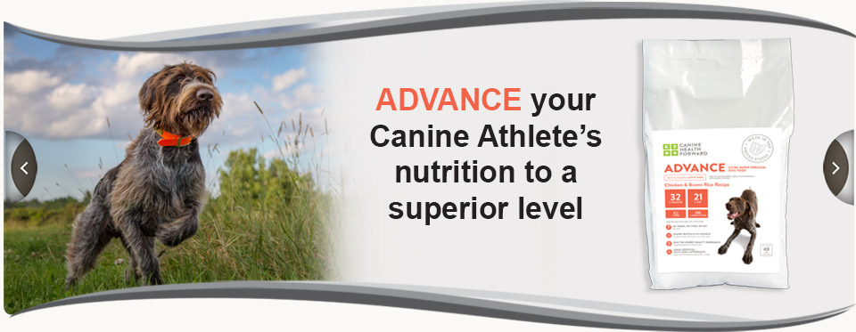 Advance your canine athlete's nutrition to a superior level