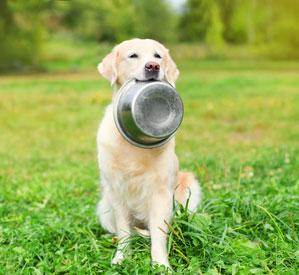 Dog with dog food dish