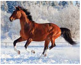 06_Winter_Horse