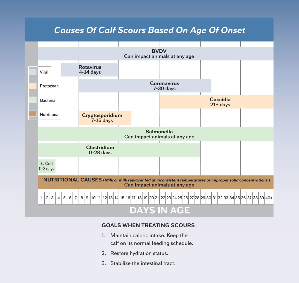 chart of causes of calf scours based on age of onset