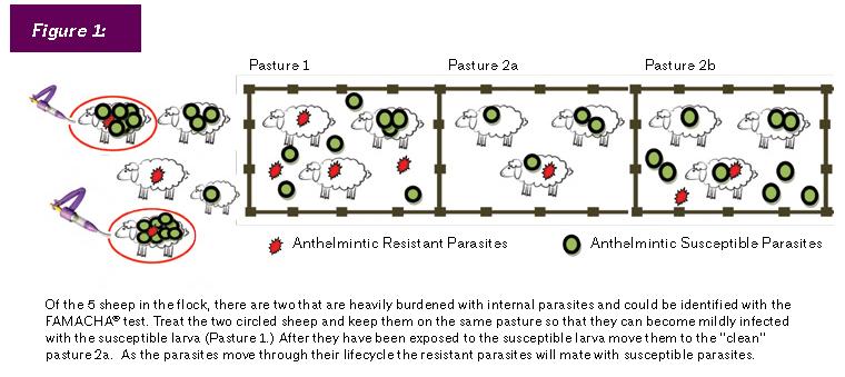 Figure 1 Parasites