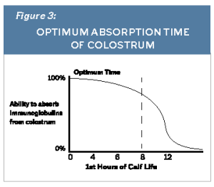 Figure 3 Optimum Absorption Time Of Colostrum