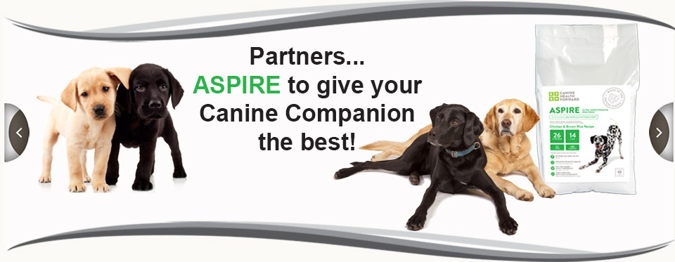 Aspire to giver your canine companion the best