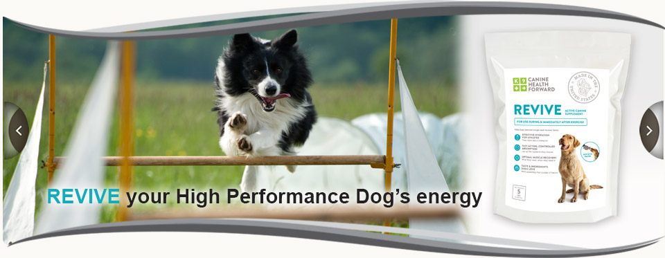 Revive your high performance dog's energy